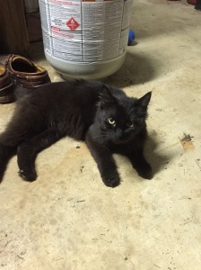 Sweet Kitten Midnight when she first came home from the animal shelter.
